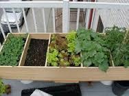 patio garden 2